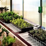 Bio Green Heat Mat 100 x 200cm (300w) with Thermostat
